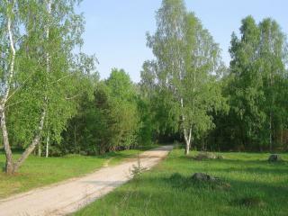 обои Весенняя дорога фото