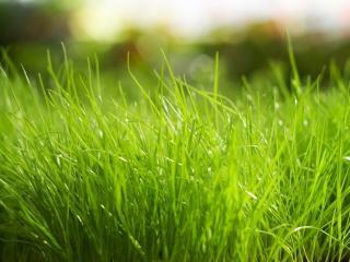 обои Залитая солнцем зеленая трава фото