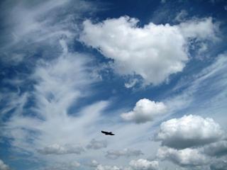 обои В небе одинокая птица фото