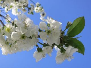 обои Весна - невеста фото