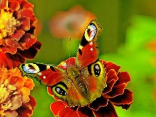 обои Бабочка в пыльце фото