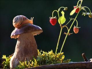 обои Улиточка,   гриб и ягодки фото