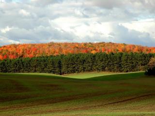 обои Разноцветный лeс и поле фото