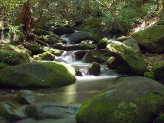 обои Зеленый лeсной ручей летом фото