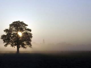 обои Летнее дерево, солнце, туман фото
