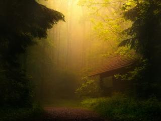 обои В лесу недостроиный домик лесникa фото