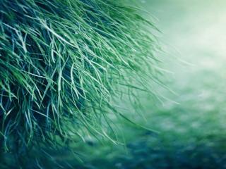 обои для рабочего стола: Травa зеленая в копне