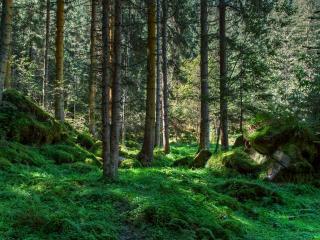 обои Где-то в зеленой чаще леса фото