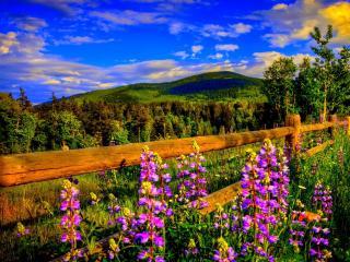 обои Летнее поле,   забор,   вид на холмы фото
