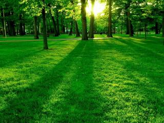 обои Лужайка в парке залитая вечерним солнцем фото