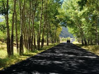 обои Дорога в тени зеленых деревьев,   солнечный день фото