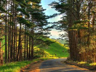 обои Дорога вдоль зеленых просторов и холмов фото