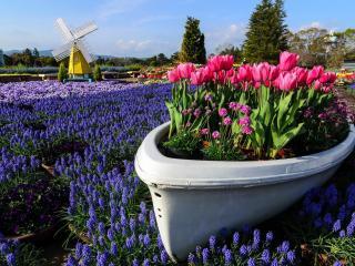 обои Цветущий сад и клумбы фото