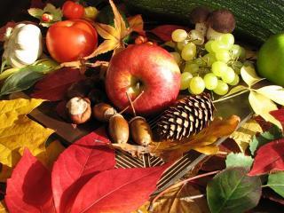 обои Натюрморт - Осенние даpы природы фото
