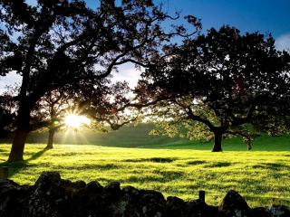 обои Вечернее солнце сквозь ветви над зеленой лужайкой фото