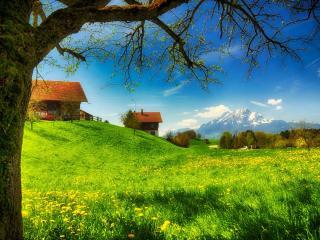 обои Дачные домики у зеленого луга,   близ гор фото