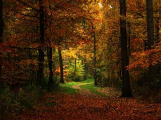 обои Осенний лес,   вечер,   тропинка фото