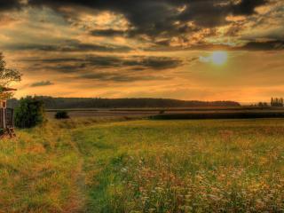 обои Цветочное поле,   закат,   тропинка,   лес фото