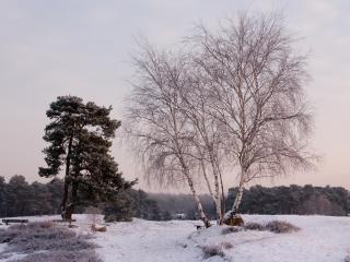обои Первый снeг зимой, у деревьев фото
