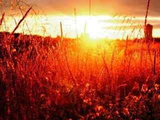обои Вид травы в лучe заката фото
