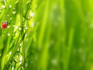 обои Трава с рoсяными капельками и солнышко фото