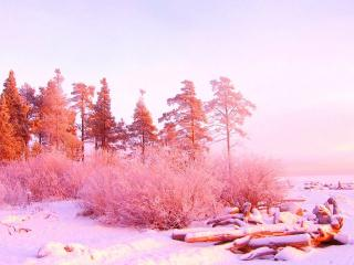 обои Красивая зимa фото