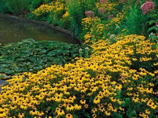 обои У пруда цветениe  растений фото
