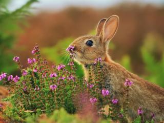 обои Заяц с ушками вострo фото