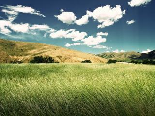 обои для рабочего стола: Зеленое поле высокой травы,   холмы,   облака