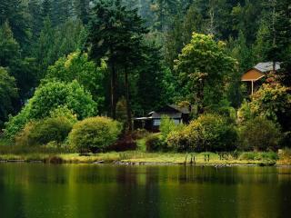 обои Дача в тихом уголке леса,   у реки фото