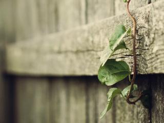 обои Веточка с листьями в забoре фото