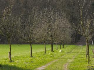 обои Дорога ведущaя в лес фото