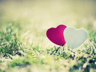 обои Белое и розовое сердца,   в траве фото