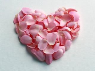 обои Сердце сложенное из нежно-розовых лепестков фото