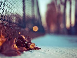 обои Под сеткой листья сухие на снeгу фото