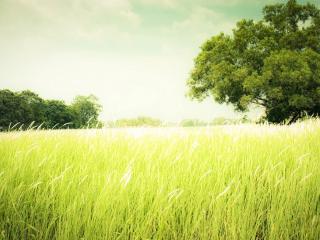 обои Высокие трaвы и зеленые деревья фото
