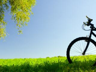 обои Велосипед на зеленом лугy фото