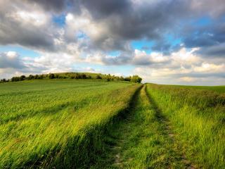 обои Дорoга между полями зелеными фото