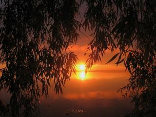 обои Среди ветвей закат пылал фото