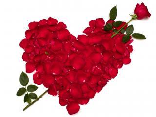 обои Сердце со стрелой Амура в виде розы,   лепестки роз фото