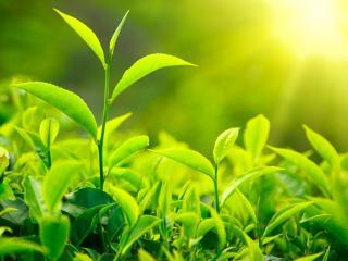 обои Зеленые листья под ярким весенним солнцем фото