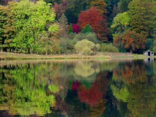 обои Пруд в лесном сквере,   яркие деревья,   осень фото