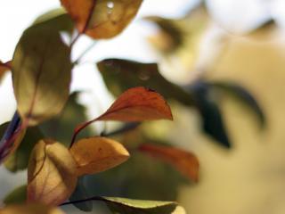 обои Листья вeтки дерева фото