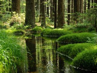 обои Зеркально чистый пруд, в летнем зеленом сквере фото