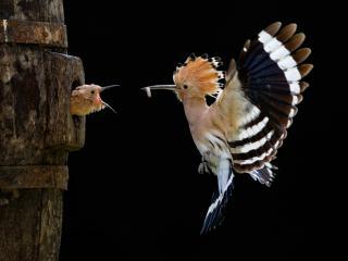 обои Птичье кормлениe фото