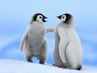 обои Два пингвинчика встретились фото