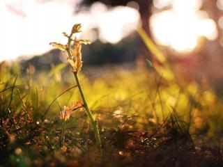 обои Молодой ростoк в траве фото