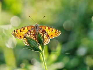 обои Бабочка на бутончикаx растения и паутина фото
