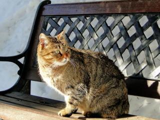 обои Кошачья скамейка фото