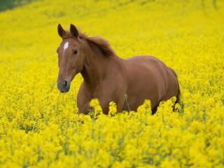 обои Лошадь и лето фото